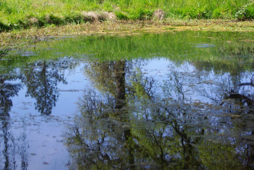 La mare à Grass Valley, leplusbeauvoyage.com